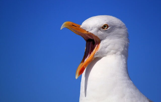 A seagull with its mouth wide open. This is for the birds! Obamacare is cutting into peoples' vacations and other discretionary items